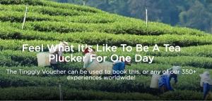 Tea plucking travel experience