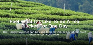 Tea plucking travel experience